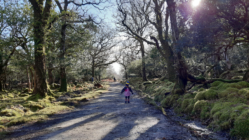 Your ultimate guide to exploring Tomies Wood in 2021.