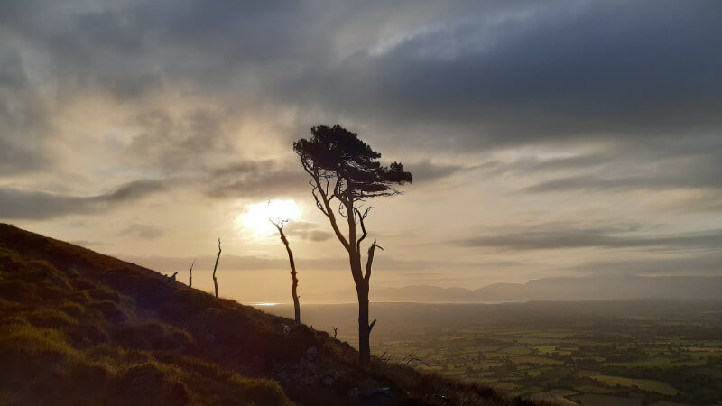 The lonely tree, two thirds the way up Strickeen. The sun is setting and you can see out across the Kerry landscape to Castlemane Harbour