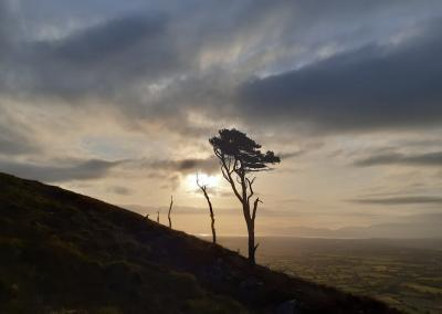 A silhouette of a tree on a mountainside against the setting sun. Green fields stretch out into the distance
